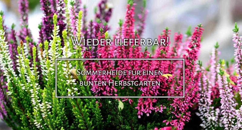 https://www.annas-garten.de/gartenpflanzen-von-a-z/heide/sommerheide/