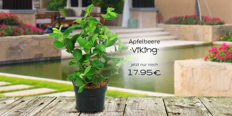 Apfelbeere Viking