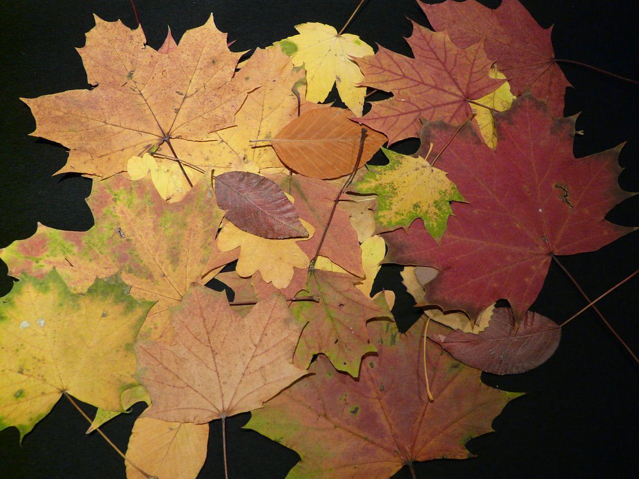 Blätter gepresst