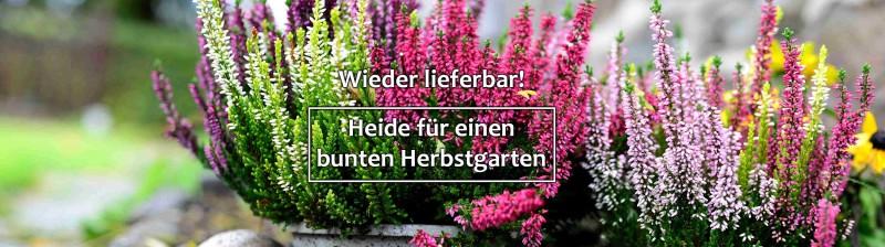 https://www.annas-garten.de/gartenpflanzen-von-a-z/heide/