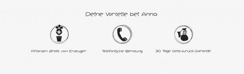 media/image/Vorteile-Pflanzen-von-Anna-TP.jpg