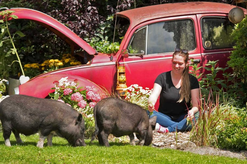 media/image/Rica-Schweinchen-01.jpg