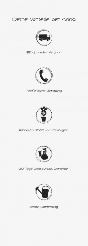 media/image/Vorteile-Pflanzen-von-Anna-MP.jpg