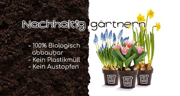 Pottburi Pflanzen