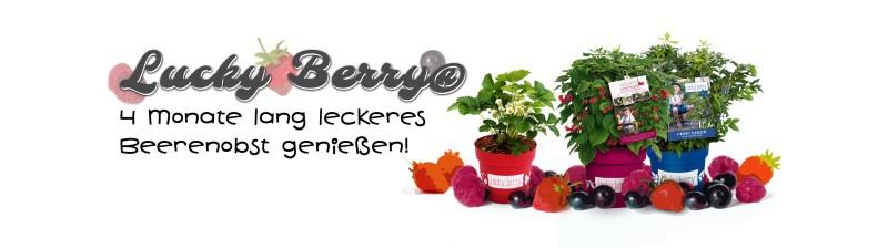 Lucky Berry Beerenobst