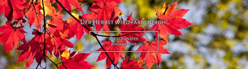 https://www.annas-garten.de/gartenpflanzen-von-a-z/ahorne/