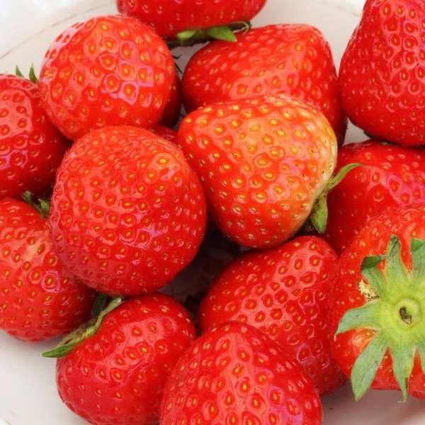 Erdbeere-Fragaria-Senga-Sengana-01