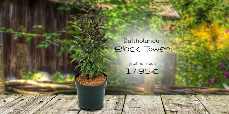 Holunder Black Tower